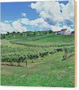 Vineyard, Whangarei, Northland, New Wood Print