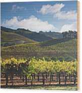 Vineyards Autumn Time In Sonoma Valley Wood Print