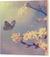 Vintage Butterfly And Cherry Tree Wood Print