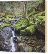 Vivid Green In The Black Forest Wood Print