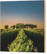 Vouvray Vineyard Wood Print