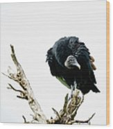 Vulture Perched On Tree Wood Print