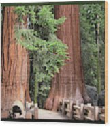 Walk Among The Giants Wood Print
