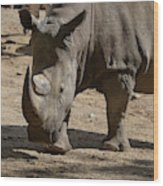 Walking Rhino With One Large Horn And One Small Horn Wood Print