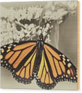 Wandering Migrant Butterfly Wood Print