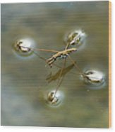 Water Bug Wood Print