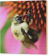 Water Drop On Bee Eye Wood Print