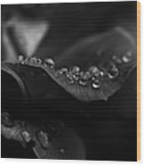 Water Droplets On A Rose Wood Print