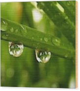 Water Drops On Wheat Leafs Wood Print