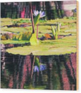 Water Lily 12 Wood Print