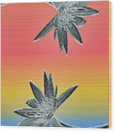 Water Lily Duo Two Wood Print