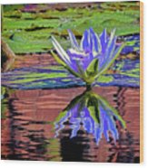 Water Lily10 Wood Print