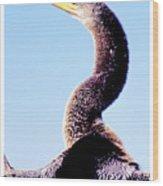 Water Turkey, Anhinga, Animal Portrait Wood Print