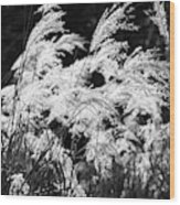 Weed Grass Black And White Wood Print