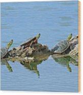 Western Painted Turtles Wood Print