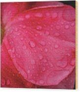 Wet Rose Petal Wood Print