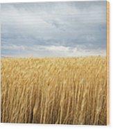 Wheat Field Under Dark Clouds Wood Print