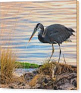 Wheeler Oregon - Great Blue Heron Wood Print