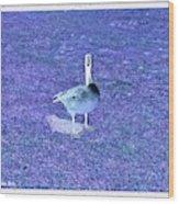 Where's Mine - The Blue Goose Wood Print