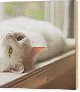 White Cat Relaxing In Windowsill Wood Print
