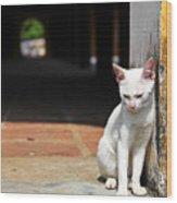 White Cat Resting Outside Wood Print