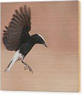 White Crowned Wheatear Wood Print