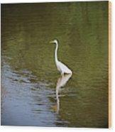 White Egret In Water Wood Print