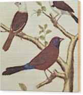 White Headed Munia, Double Coloured Seed Eater And Violet Eared Waxbill Wood Print