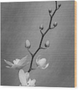 White Orchid Buds Wood Print