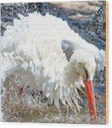 White Stork Fishing Wood Print