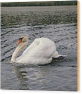 White Swan On Lake Wood Print