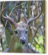 White Tailed Buck Portrait Wood Print