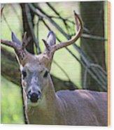 White Tailed Buck Portrait I Wood Print