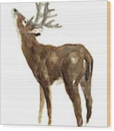 White Tailed Deer Stag With Head Tilted Upwards Wood Print