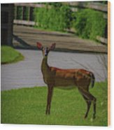 White Tailed Doe Wood Print