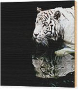 White Tiger In Water Wood Print