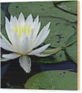 White Water Lilly Wood Print