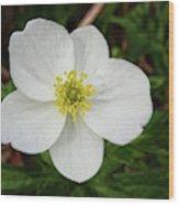 White Wood Anemone Wood Print