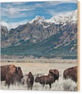 Wild Bison On The Open Range Wood Print