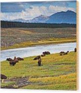 Wild Bison Roam Free Beneath Mountains Wood Print