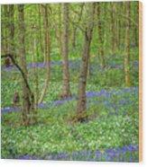 Wild Garlic And Bluebells Wood Print