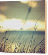Wild Grasses At Golden Summer Sunset Wood Print