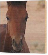 Wild Horse Luke Wood Print