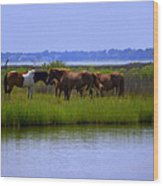 Wild Horses Of Assateague Island Wood Print
