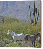 Wild Horses Tonto National Forest Wood Print