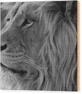 Wild Lion Face Wood Print