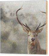 Wild Nature - Stag Wood Print