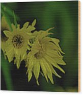 Wild Sunflowers In The Wind Wood Print