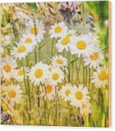 Wild White Daisies Wood Print