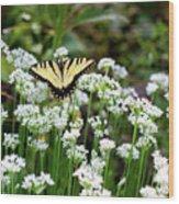 Wildflower Butterfly Wood Print
